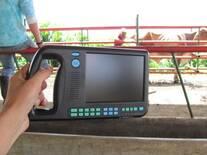 Práctica de ecografía en bovinos