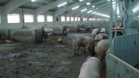 La obligación de poner juguetes en las granjas es subrealista