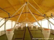 Agropecuaria La Lucia, Alberti Bs.As. Nave Destete-Recría