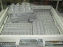 Termoformadora de empaques para huevos