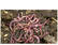 Venta de lombriz roja californiana