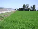 venta de silopacas de alfalfa y maiz de primera calidad