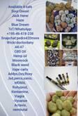 Strawberry, Sour Diesel, Jack Herer, Durban Poison, Haze, Pineapple Express, Blue Dream, Purple Haze