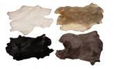 pieles de conejo
