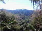Se vende FINCA 252 hectareas Puesto Limon Costa Rica