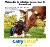 CalfyGold Colostrum