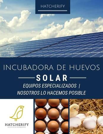 Incubadora Solar para Huevos: Gallina, codorniz, pato