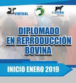 Diplomado en reproducción bovina