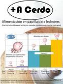 Alimentación en papilla para lechones