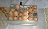 classificador de ovos manual  de aluminio para bandejas de 30 ovos