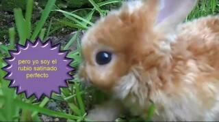 conejo rojo satinado