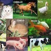 Accesorios para animales