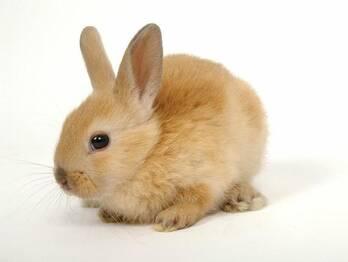 Comercializamos conejos