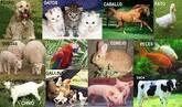 Alimentos para animales. . .