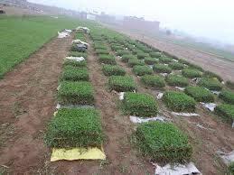 VENTA DE GRASS AMERICANO JAPONES PASSPALUM X MAYOR Y MENOR A NIVEL NACIONAL