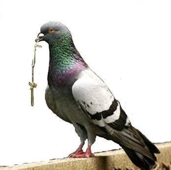 Repelentes contra plaga de aves
