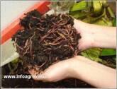 Abonos Orgánicos, compostaje y lombrihumus