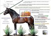 Doctal-Horse  Fisio-Key