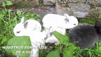 conejitos para mascota