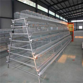China Mejor jaulas de pollo de calidad