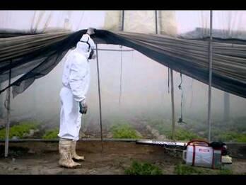 Termonebulizadores pulsFOG invernaderos