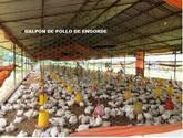 Instalación de sistemas de Ozono en Galpones Avícolas, porcinos, plantas de agua, salones públicos,