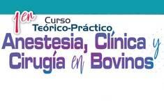 1er. Curso Teórico-Práctico de Anestesia, Clínica y Cirugía en Bovinos