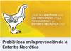 Enteritis en pollos
