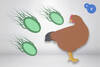 Coccidiosis aviar