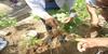 Fertilización Soja