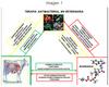 Antimicrobianos en Bovinos