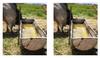 Instalaciones en ganado de carne: Bebedero - Comedero - Aguada