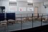 Instalaciones en cerdos: comederos - bebederos