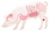 Salud intestinal en cerdos