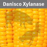 Danisco Xylanase