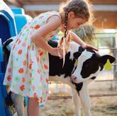 Lactoreemplazantes - Sustitutos lácteos