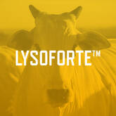 LYSOFORTE™ Extend - Ruminantes