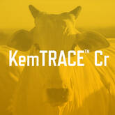 KemTRACE™ Cromo para Vacas Leiteiras