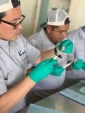 Curso de Fertilización y cultivo de embriones invitro en bovinos
