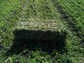 Venta de pacas de alfalfa.