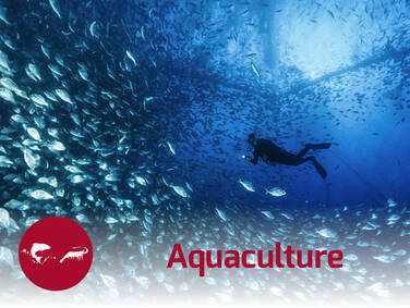 Nutrition and health solutions for aquaculture