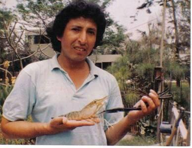 Shrimp La Molina Perù