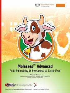 Molasses Advanced