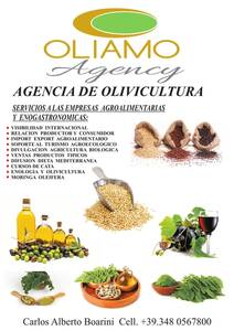 service of Oliamo Agency