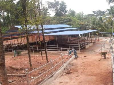 Freestall shed for 48 cows