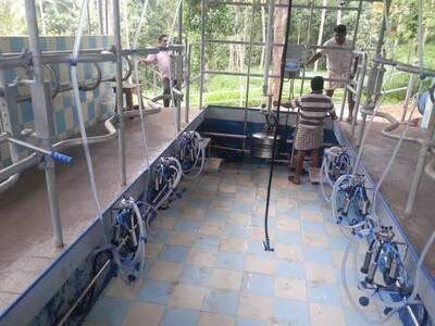 2 x3 Herringborne milking parlour