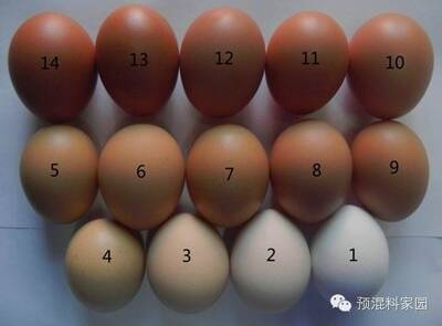 The shell shade guide and nutritional factors affecting egg shell color