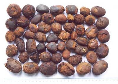 Cow , ox gallstones for sale `