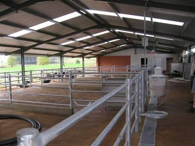 Inside the calf rearing shed