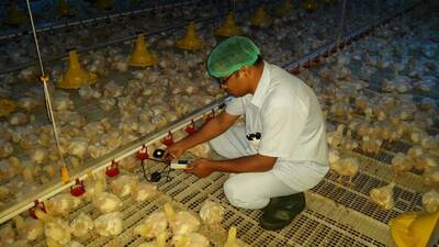 poultry Specialist